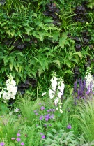 Wellbeing of Women garden 2015 living wall