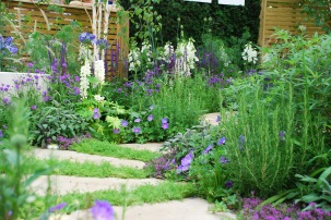 Wellbeing of Women garden 2015 path