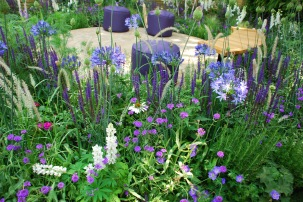 Wellbeing of Women garden 2015 plants